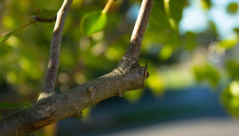 Should You Use a Tree Pruning Sealant