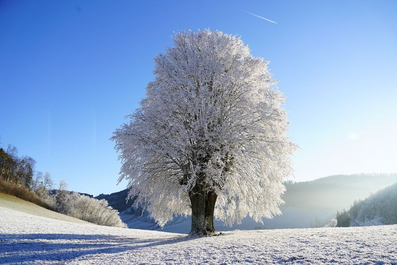 Are Trees a Renewable or Nonrenewable Resource